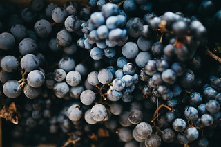 Background of a black grapes in a  box | by shixart1985