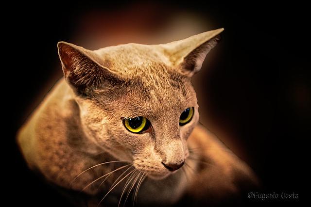 Gatti (9) Cats (9)