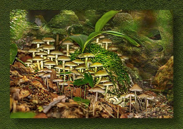 Mushrooms at the Source