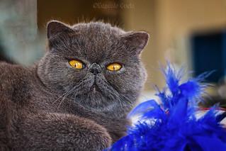 Gatti (10) Cats (10)
