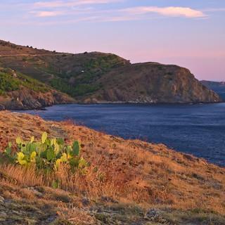 Cactus in sunrise - Cerbère
