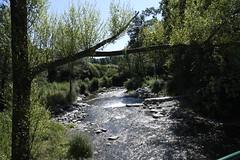 Riu Ter prop de Camprodon, Girona.