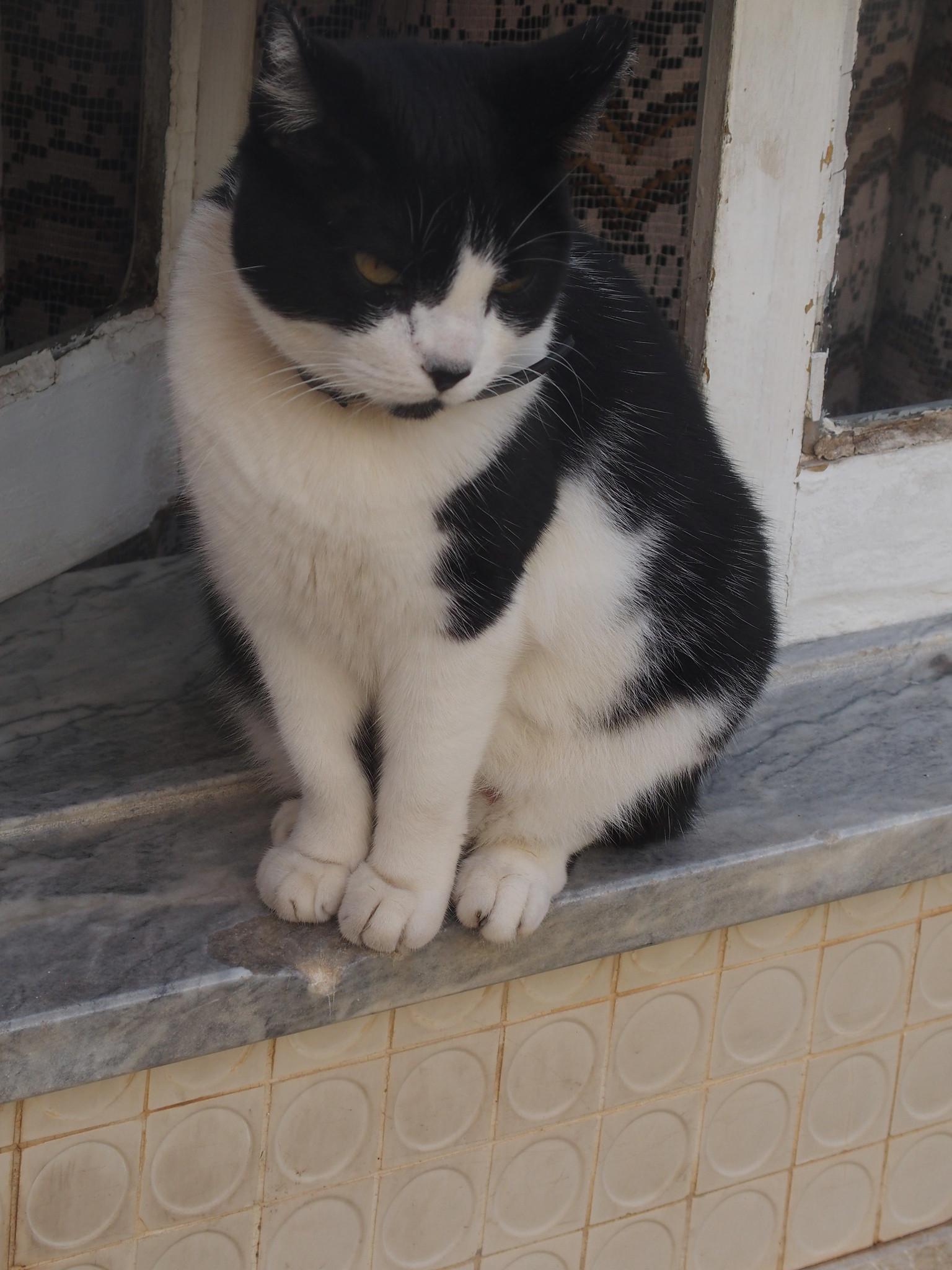A2 Katten