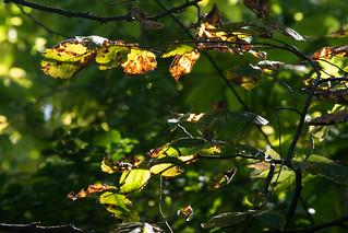 October_Midday_Light