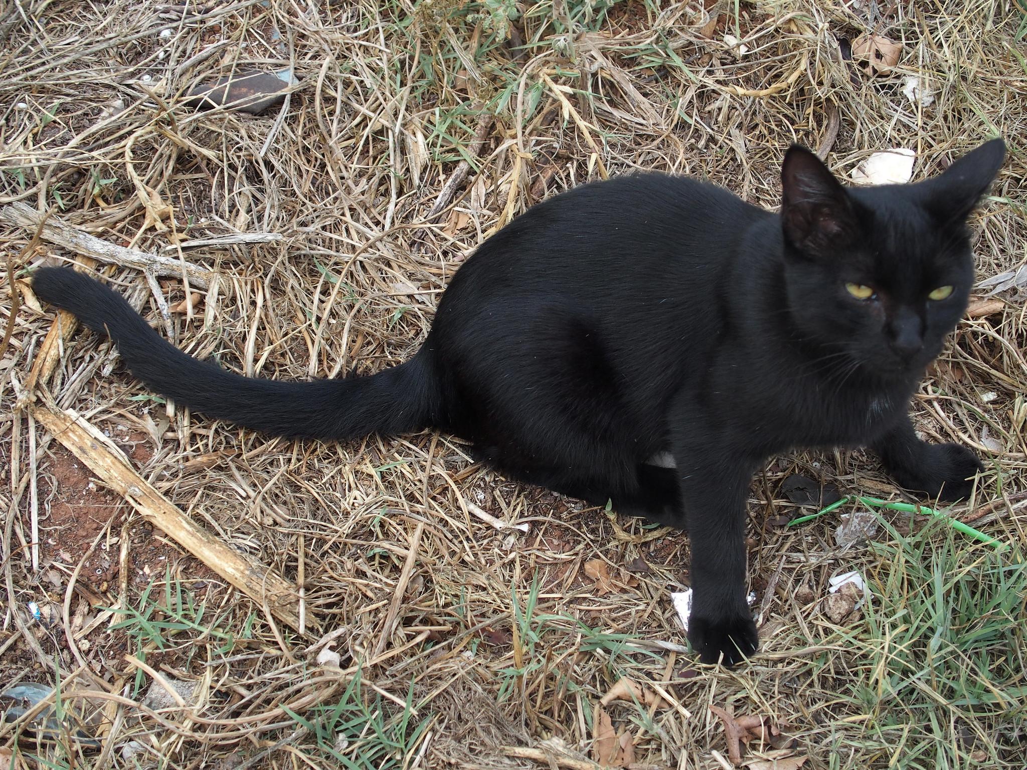 A15 Katten