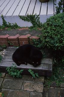 My Friend, Blackie