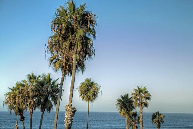 O'Side Morning Palms 02-10-19-19