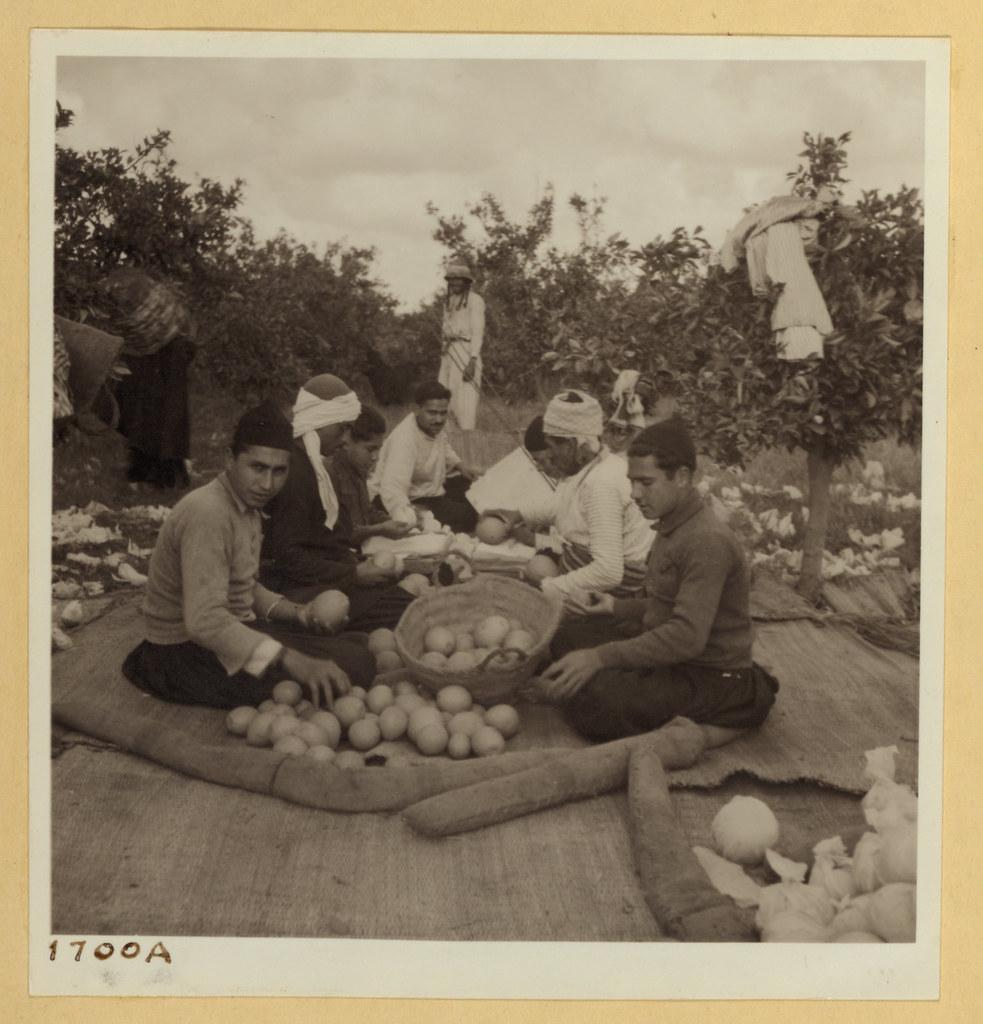 9 марта. Тель-Авив и окрестности. Мужчины сортируют и осматривают фрукты