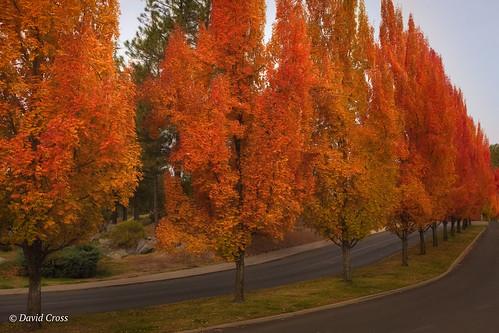 california landscape nevadacity sierranevadafoothills autumncolor canon5dmarkiii lightroom6 canonef35mmf2isusm topazstudio maiduroad fall nevadacounty autumn