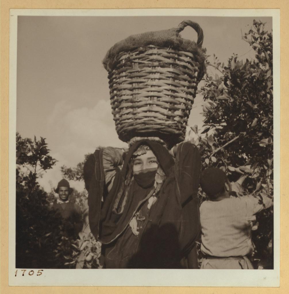 9 марта. Бедуинская девушка приносит апельсины
