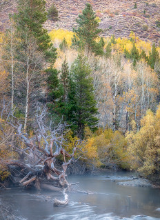 Roots, Rush Creek