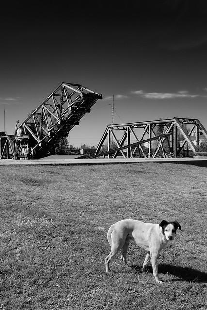 Puente del Perro
