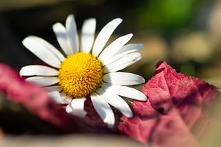 Little blossom in the autumn sun