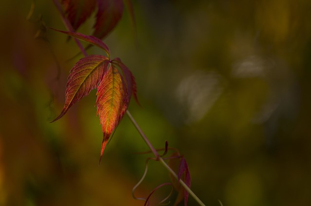 Colorful autumn-2...