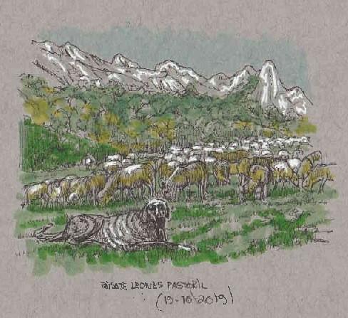 Mastín y rebaño ovejas merinas