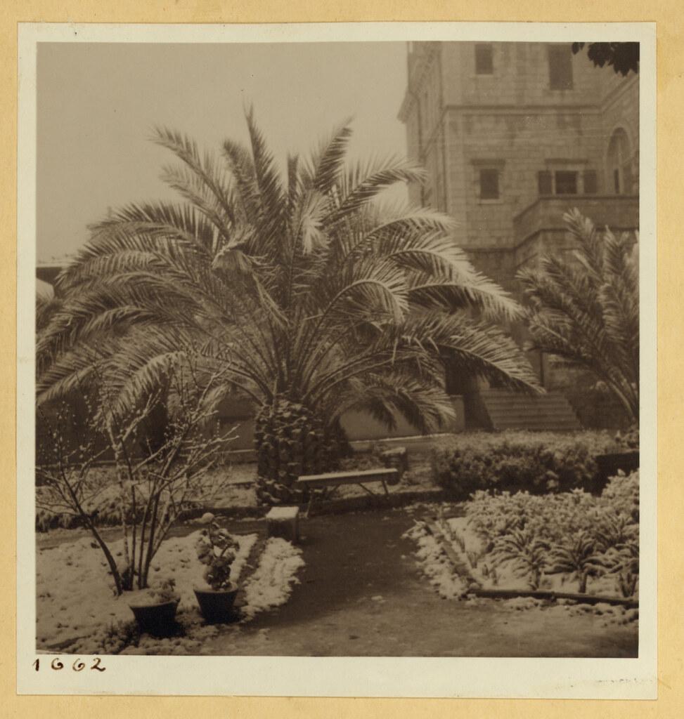 28 февраля. Иерусалим. Пальмы в снегу