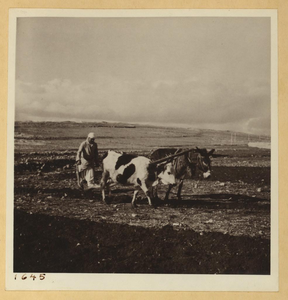 23 января. Вспашка по дороге в Рамаллу