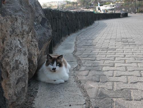 Playa Blanca, cat