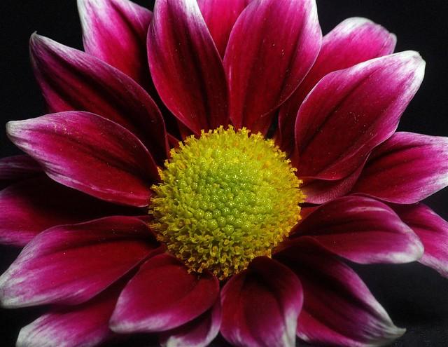 365 - Image 292 - Flower...