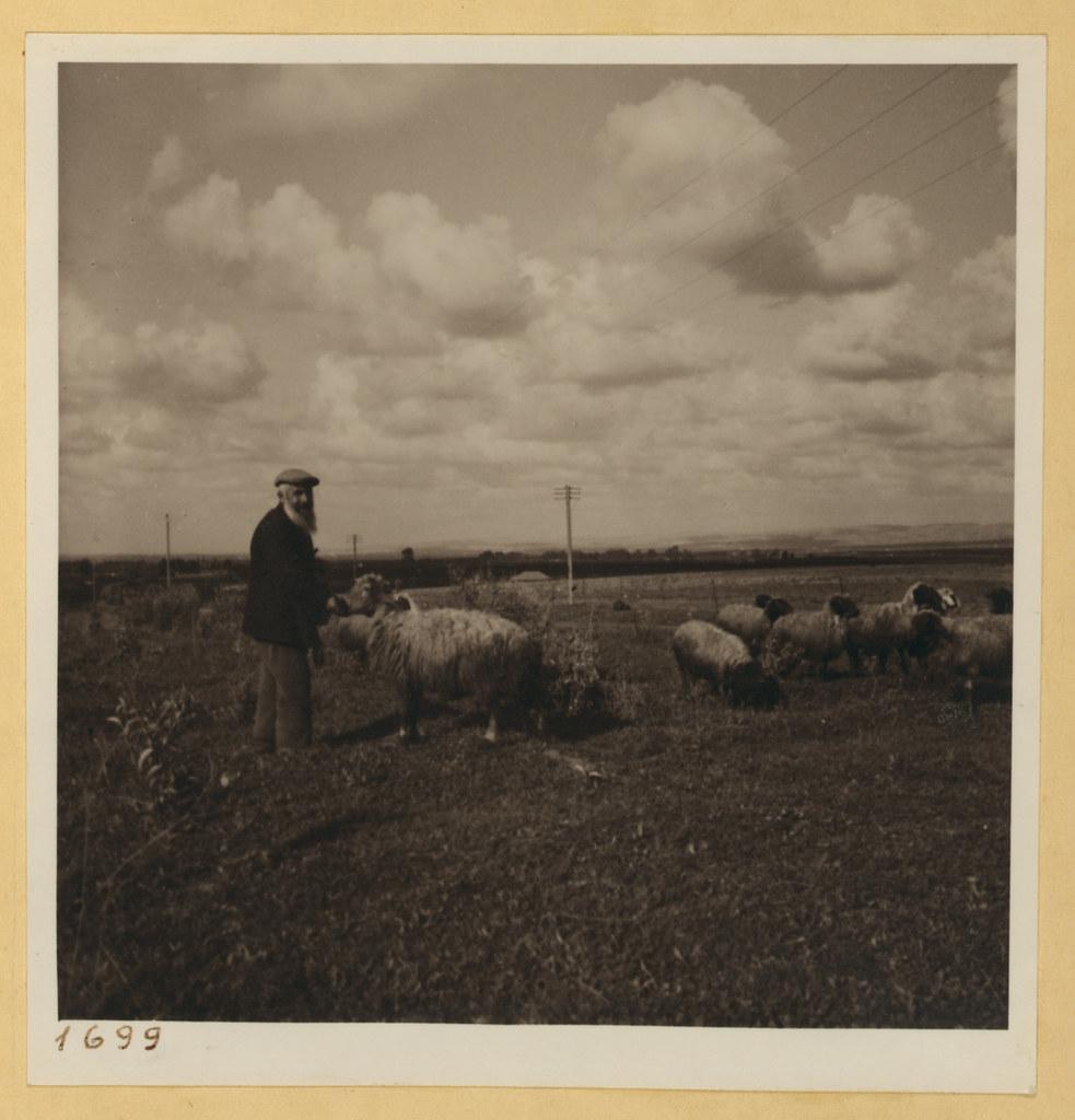 9 марта. Тель-Авив и окрестности,  Еврей пастух и его стадо