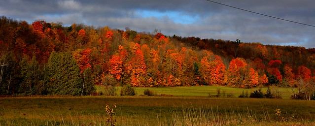 Fall Colours, Hwy 30 North, ON