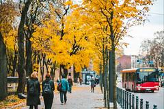 Autumn leaves | Kaunas #291/365