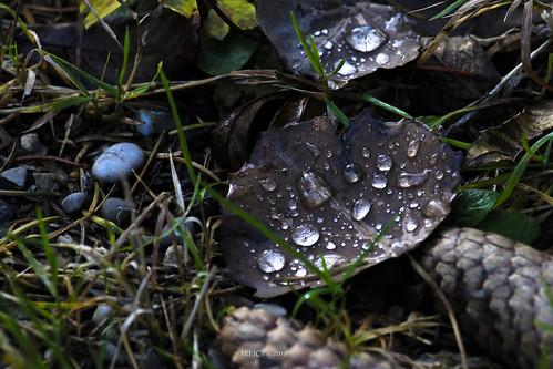 Nachdem Regen II - After the rain II
