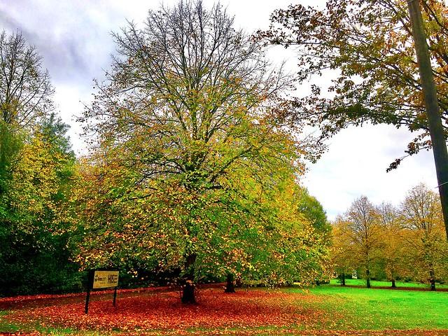 #Autumn #Rheinland