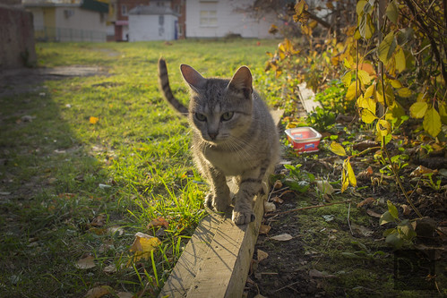 Cat under autumn sun