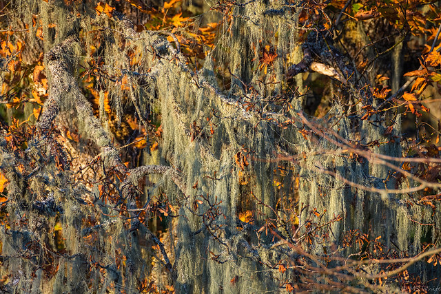 Of leaves and lichen in autumn.