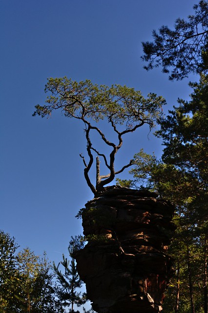 Tree in the Palatinate Forest