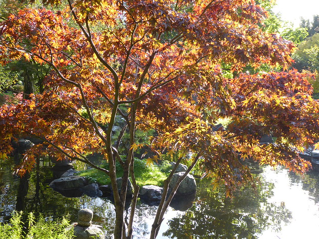 Kyoto Garden, Holland Park, London