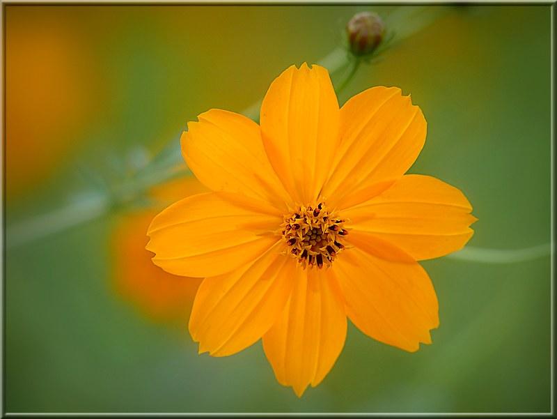 Au jardin des plantes. - Page 7 48925482283_e4e559d471_c