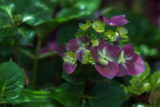 Purple and Green