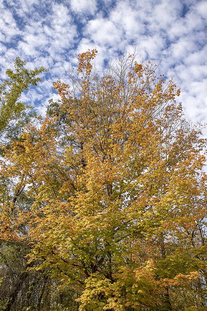 Autumn At Eagle Creek