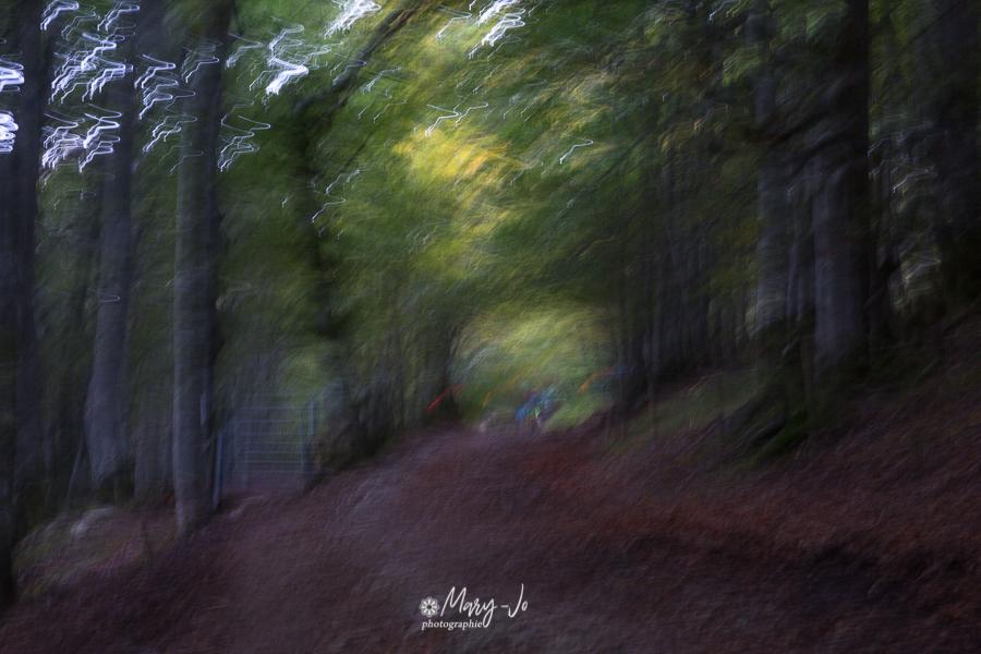 Promenade en sous-bois ...  Walk in the undergrowth ...