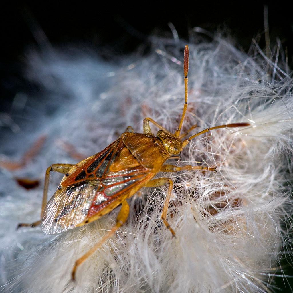 Macros/  proxi/  insectes  - Page 18 48925852267_a6b4160343_b