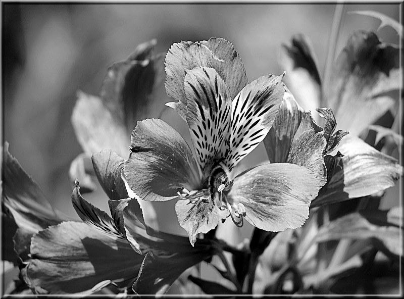 Au jardin des plantes. - Page 7 48926016326_86c39a8494_c