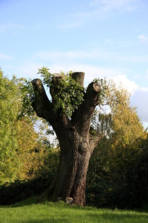 Tree (42/52)