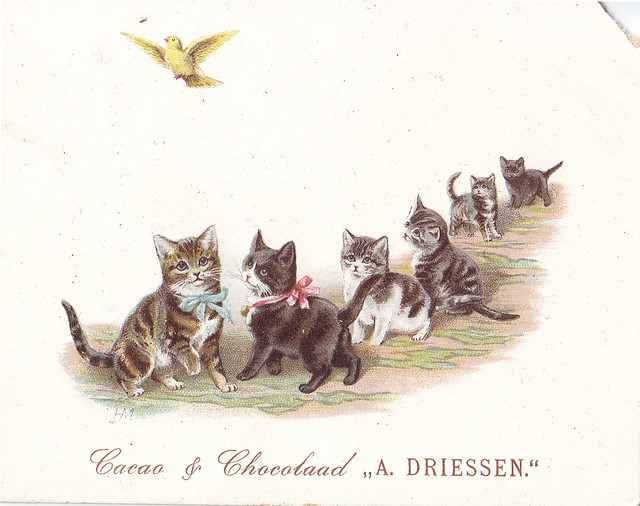 CHROMO CACAO DRIESSEN  - SIX KITTENS WITH FRONT TWO WEARING RED AND BLUE NECK RIBBONS WATH A YELLOW BIRD FLYING ABOVE