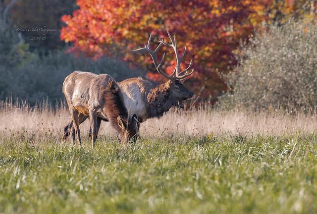 Elk PA.