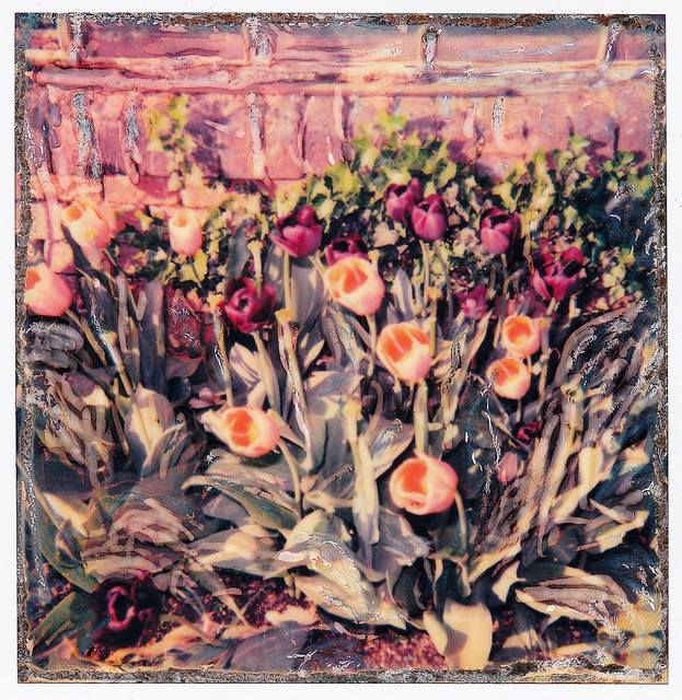 Tulips at the Castle of Pralormo