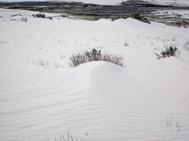 Killpecker Sand Dunes (Leucite Hills, north of Rock Springs, Wyoming, USA) 85