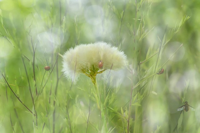 A Charming Meadow HSS