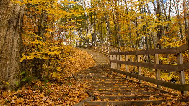 Automne, autumn - Sentier, Parc Chauveau - Québec, Canada - 4940