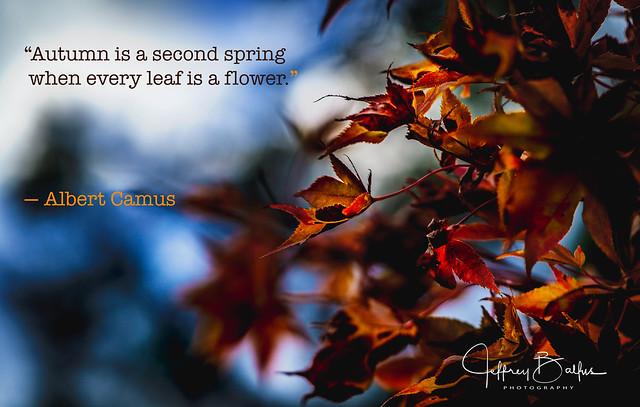 Camus Quote Autumn-seen in EXPLORE