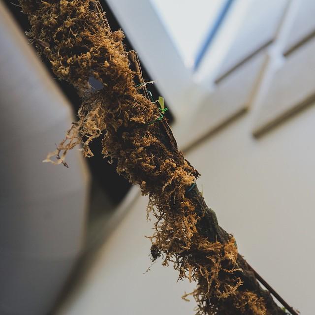 Cutter ant path