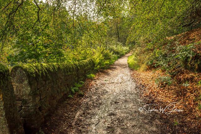 SJ2_2310 - Leafy footpath