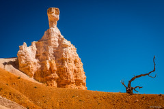 Bryce Canyon - Observer