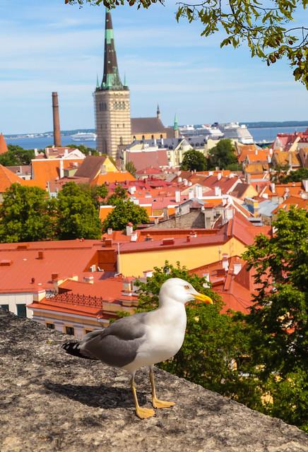 Birds of Tallinn